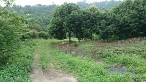 新社古堡農場用地使用2500坪 台中土地房屋02